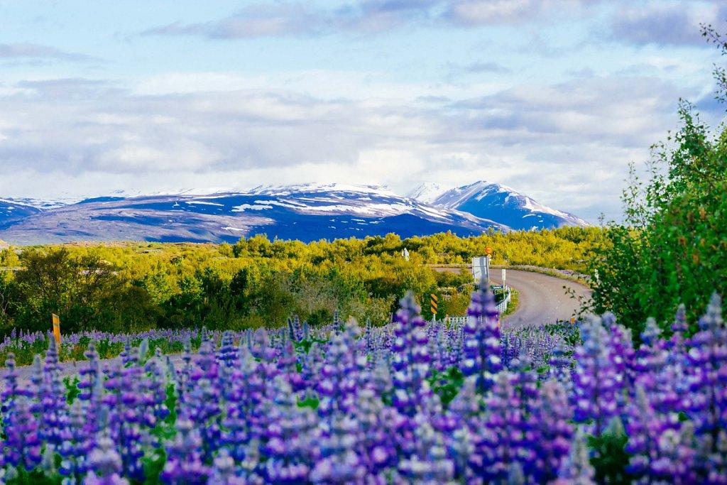Iceland-Select-7.jpg